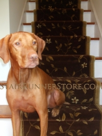 make-stairs-safe-for-dog-stair-runner-installation-1