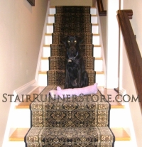 pets-on-stairs-1