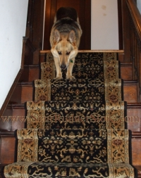 pets-on-stairs-2884