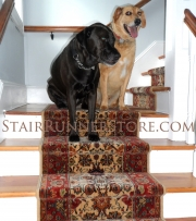Karastan Stratford Pets on stairs_2652 small