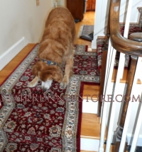 pets-on-stairs-0311