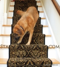 pets-on-stairs-374
