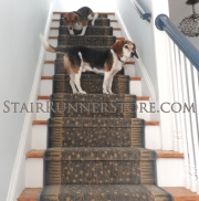 pets on stairs contemporary runner installation 2638 med